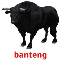 banteng picture flashcards