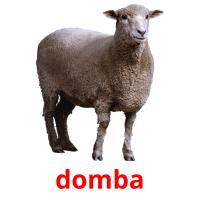domba picture flashcards