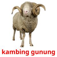 kambing gunung picture flashcards