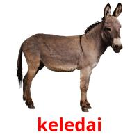 keledai picture flashcards