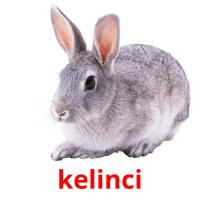 kelinci picture flashcards