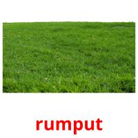 rumput picture flashcards
