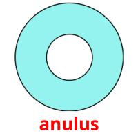 anulus picture flashcards