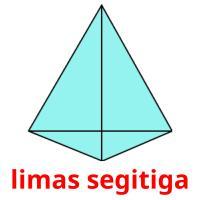 limas segitiga picture flashcards