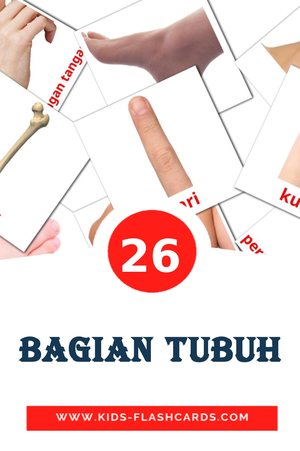 26 Bagian Tubuh Picture Cards for Kindergarden in indonesian