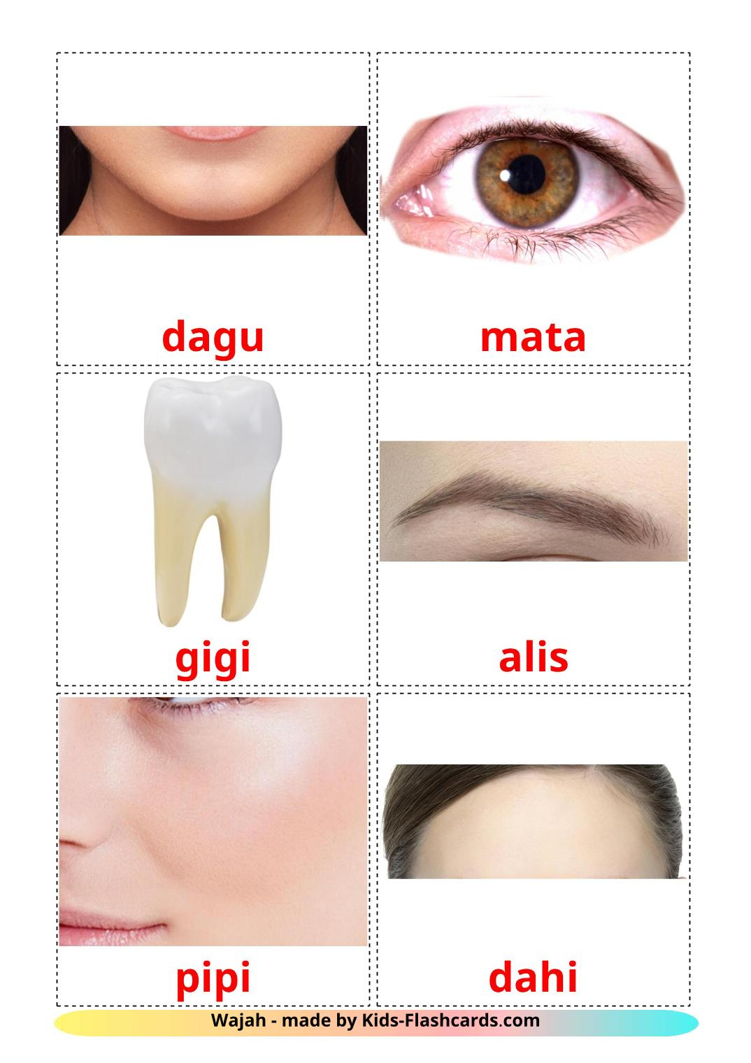 Face - 20 Free Printable indonesian Flashcards