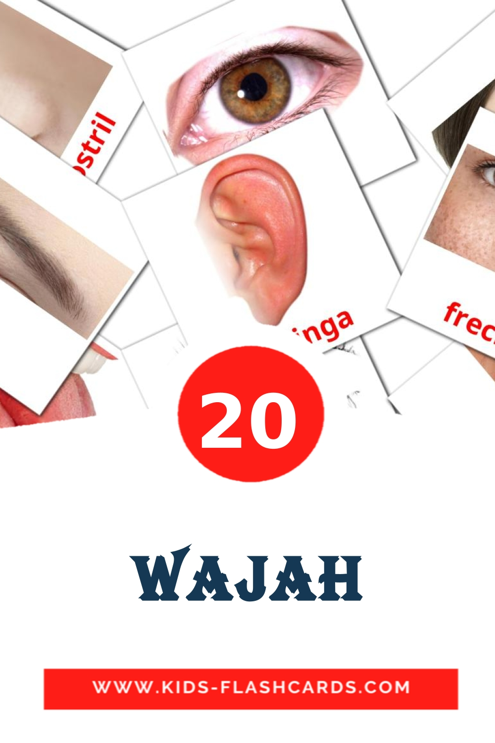 20 Wajah Picture Cards for Kindergarden in indonesian