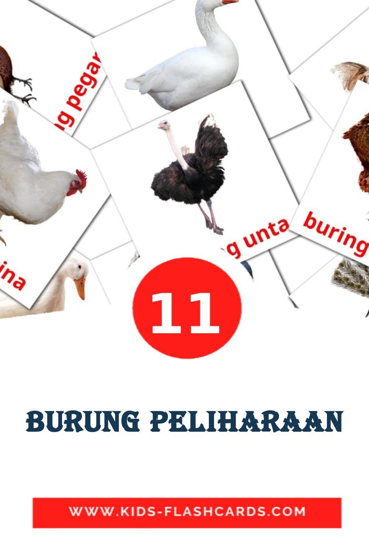11 Burung peliharaan Picture Cards for Kindergarden in indonesian