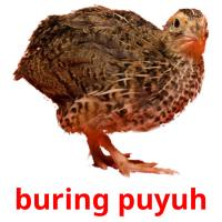 buring puyuh picture flashcards