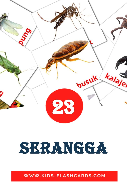 23 Serangga Picture Cards for Kindergarden in indonesian