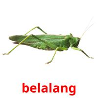 belalang picture flashcards