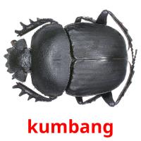 kumbang picture flashcards