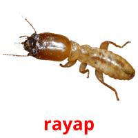 rayap picture flashcards