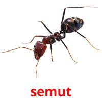 semut picture flashcards