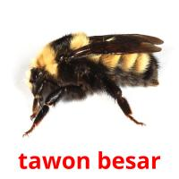 tawon besar picture flashcards