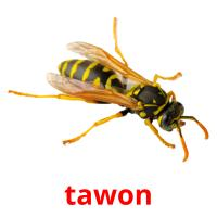 tawon picture flashcards