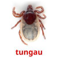 tungau picture flashcards