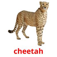 cheetah picture flashcards