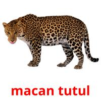 macan tutul picture flashcards