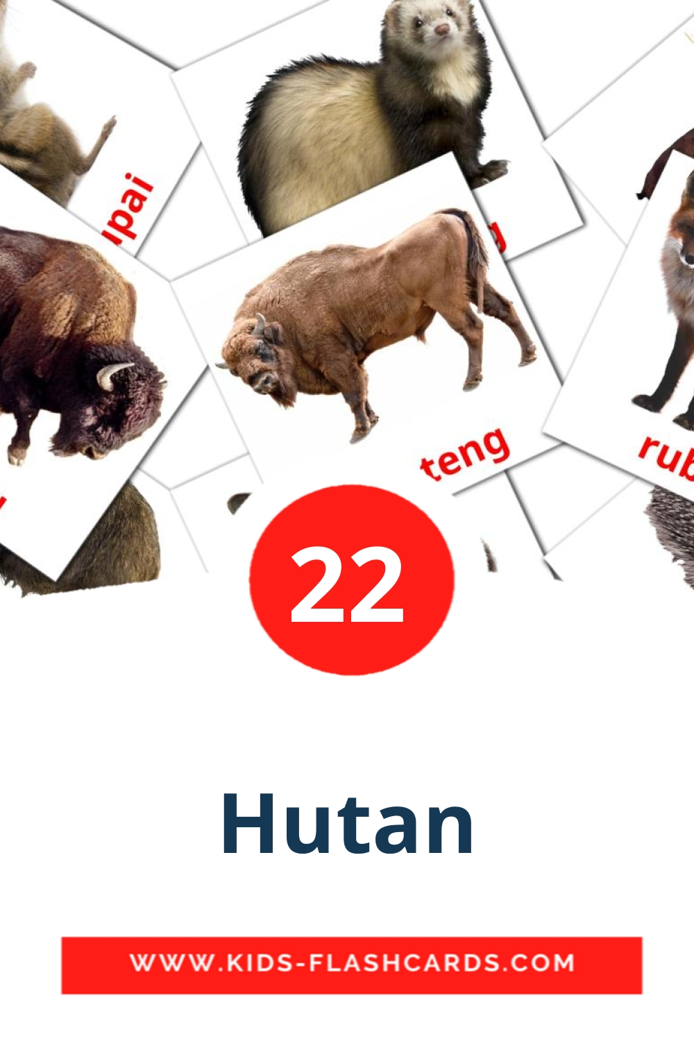 22 Hutan Picture Cards for Kindergarden in indonesian