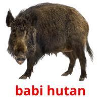 babi hutan picture flashcards