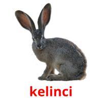 kelinci picture flashcards