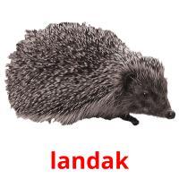landak picture flashcards