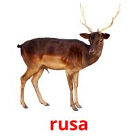 rusa picture flashcards