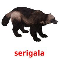 serigala picture flashcards