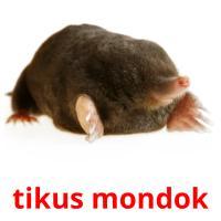 tikus mondok picture flashcards