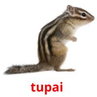 tupai  picture flashcards