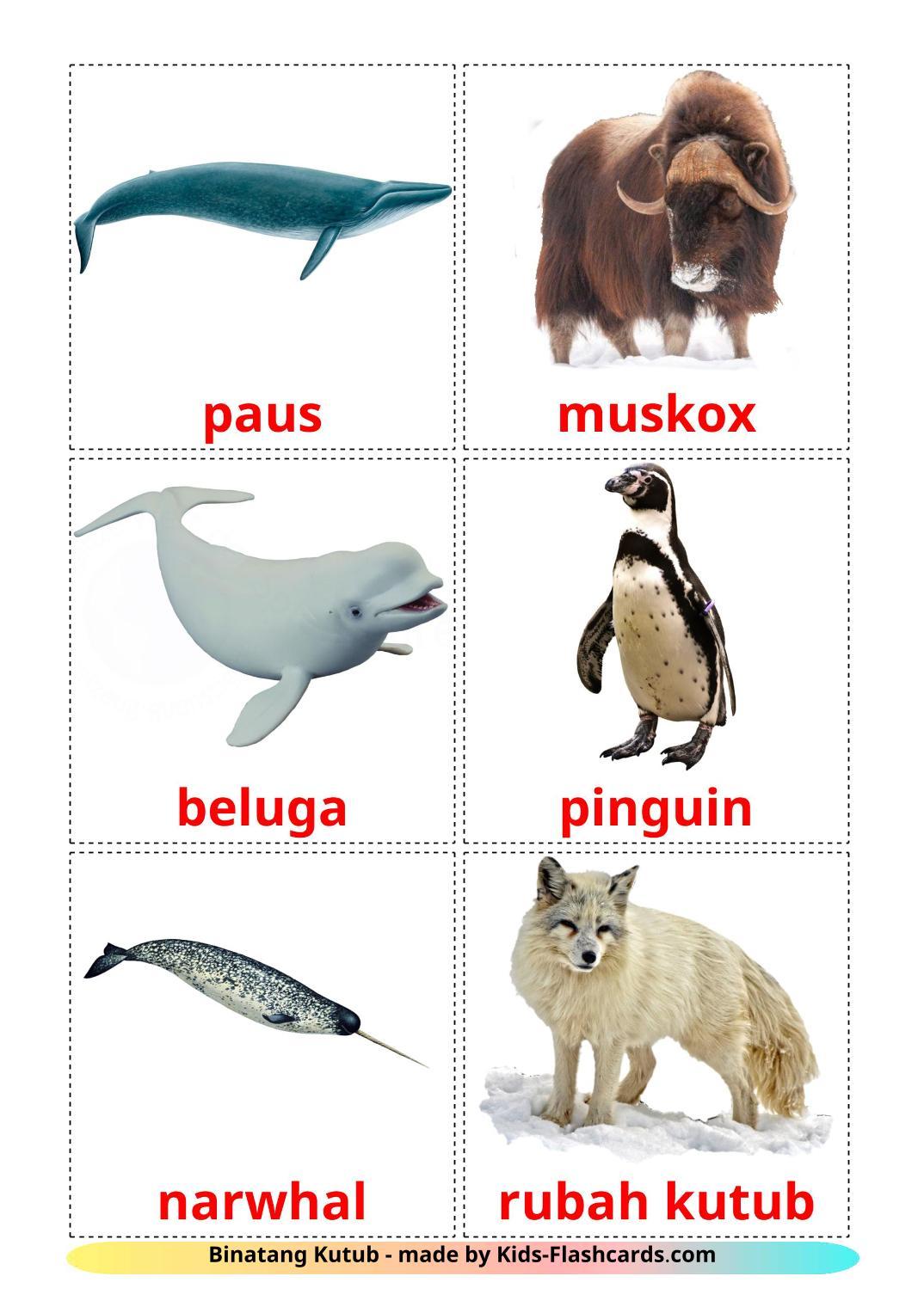 Arctic animals - 14 Free Printable indonesian Flashcards