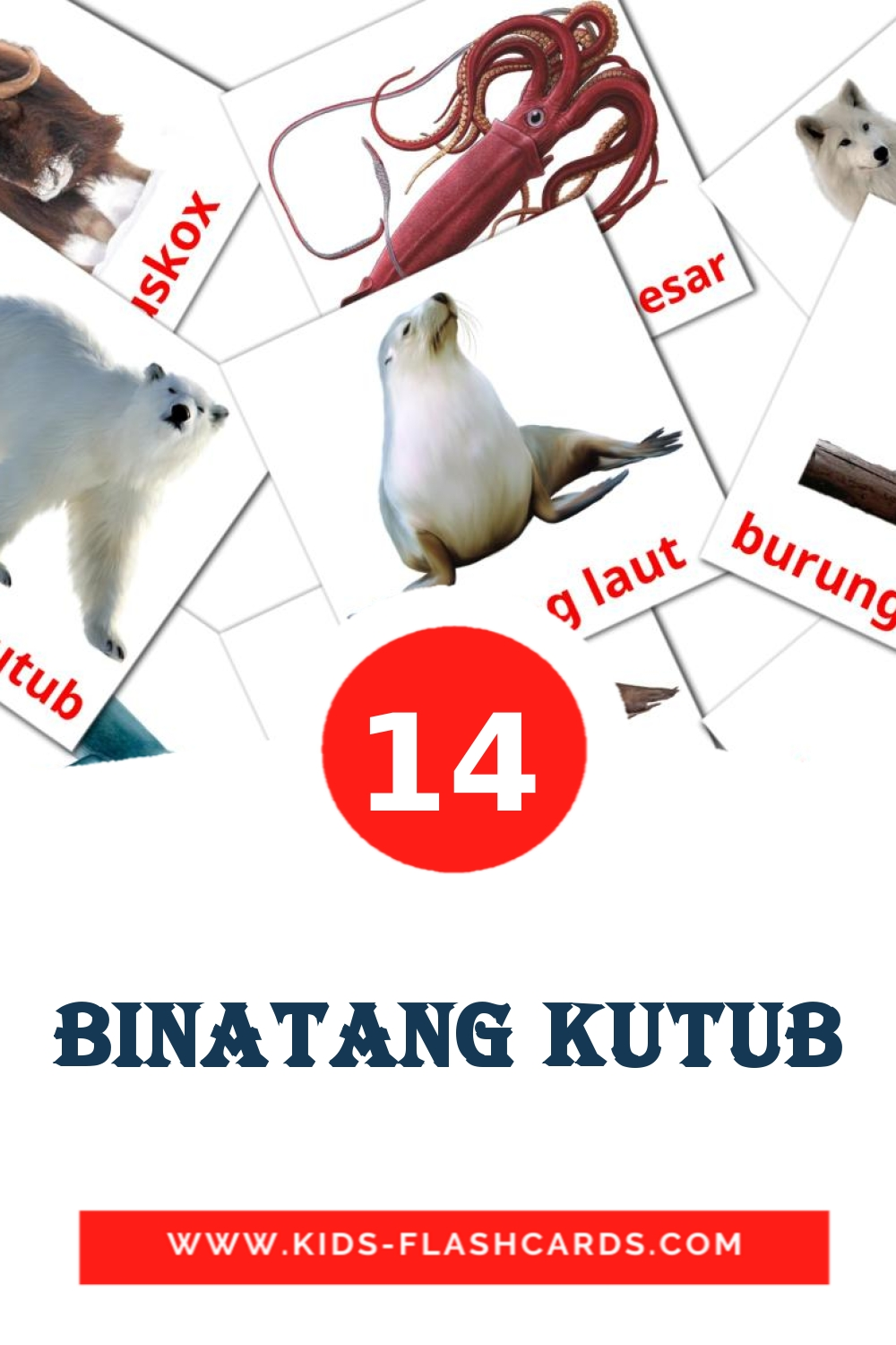 14 Binatang Kutub Picture Cards for Kindergarden in indonesian