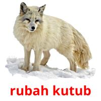 rubah kutub picture flashcards