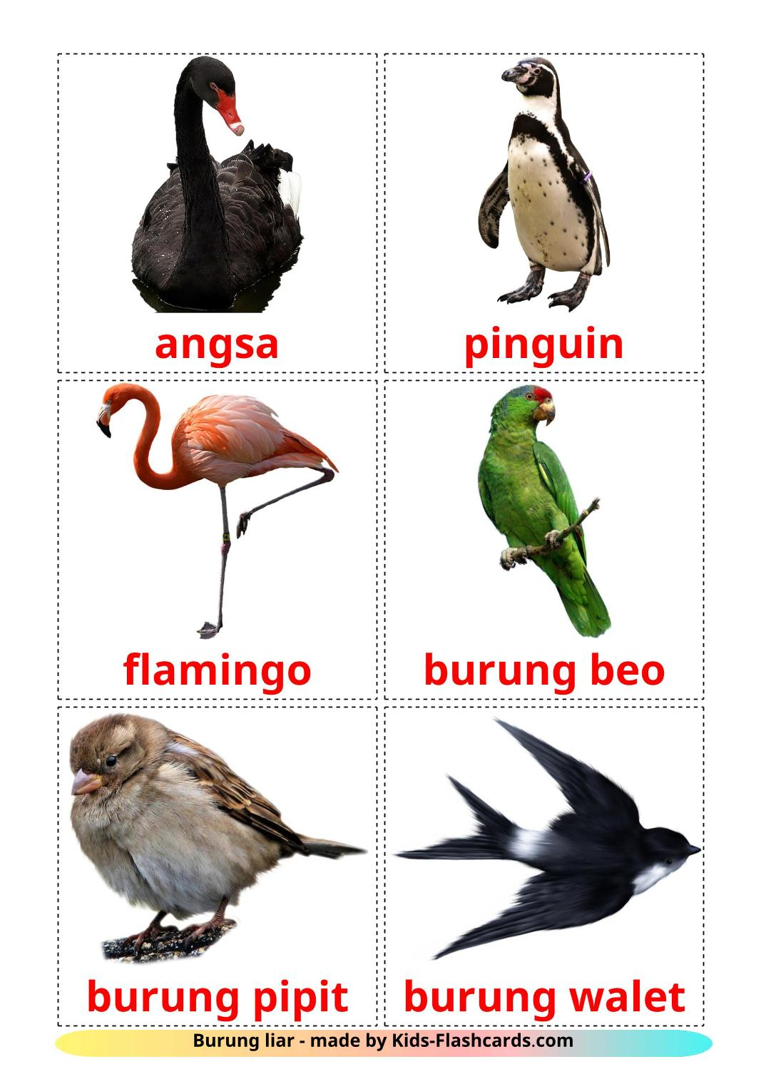 Wild birds - 18 Free Printable indonesian Flashcards