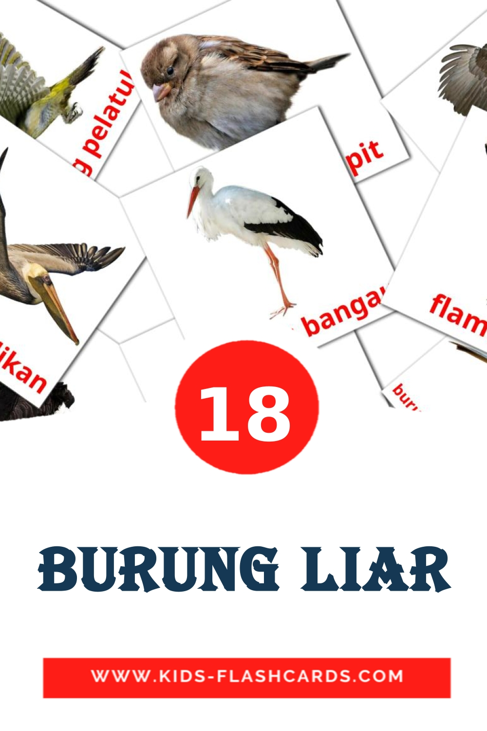 18 Burung liar Picture Cards for Kindergarden in indonesian