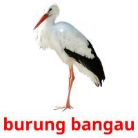 burung bangau picture flashcards