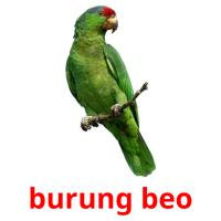 burung beo picture flashcards