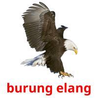 burung elang picture flashcards