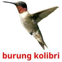 burung kolibri picture flashcards