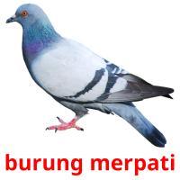 burung merpati picture flashcards