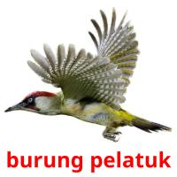 burung pelatuk picture flashcards