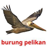 burung pelikan picture flashcards