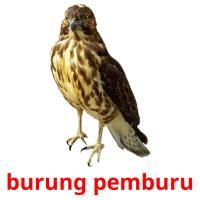 burung pemburu picture flashcards
