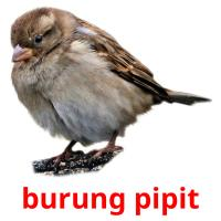 burung pipit picture flashcards