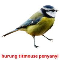 burung titmouse penyanyi picture flashcards