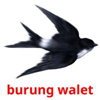 burung walet picture flashcards