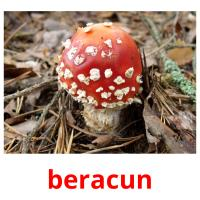 beracun picture flashcards