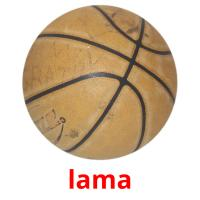 lama picture flashcards