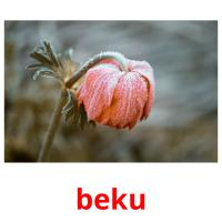 beku picture flashcards